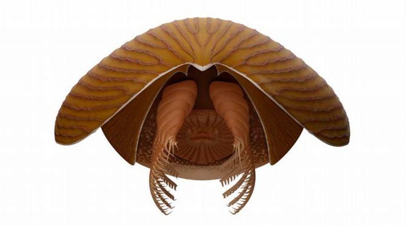 """El """"Titanokorys gainesi"""" era un gigante en comparación con la mayoría de los animales que vivían en los mares en esa época, la mayoría de los cuales apenas alcanzaba el tamaño de un dedo meñique Hace unos 506 millones de años, una extraña criatura marina cuyo cuerpo se asemejaba tanto a una nave espacial de ciencia ficción que ha sido apodada """"la nave nodriza"""" prosperó en los mares tropicales, amenazando a sus presas en el fondo del océano en lo que hoy es Canadá como uno de los mayores depredadores de la Tierra hasta ese momento. Los científicos anunciaron este miércoles (08.09.2021) el descubrimiento de los fósiles de un artrópodo del periodo Cámbrico llamado Titanokorys gainesi en el Parque Nacional de Kootenay, en las Rocosas canadienses, dentro de una vasta formación rocosa llamada Pizarra de Burgess. Los detalles del hallazgo se publican hoy en la revista Royal Society Open Science. Un gigante de su época Con una longitud estimada de medio metro, Titanokorys era un gigante en comparación con la mayoría de los animales que vivían en los mares en esa época, la mayoría de los cuales apenas alcanzaba el tamaño de un dedo meñique. """"El tamaño de este animal es absolutamente alucinante, se trata de uno de los mayores animales del período Cámbrico jamás encontrados"""", afirma Jean-Bernard Caron, conservador de paleontología de invertebrados Richard M. Ivey del ROM. Perteneciente al grupo de los radiodontos Desde el punto de vista evolutivo, Titanokorys pertenece a un grupo de artrópodos primitivos llamados radiodontos, cuyo representante más emblemático es el depredador aerodinámico Anomalocaris, que pudo haber alcanzado el metro de longitud. Como todos los radiodontos, el Titanokorys tenía ojos multifacéticos (común en insectos y crustáceos actuales), una boca forrada de dientes en forma de rodaja de piña, un par de garras espinosas bajo la cabeza para capturar presas y un cuerpo con aletas para nadar. Dentro de este grupo, algunas especies también poseían grandes y ll"""