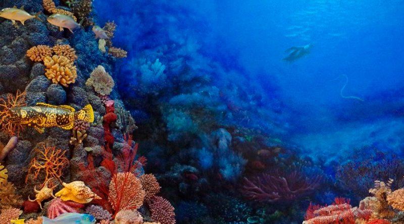 Conoce a 3 de los animales marinos más venenosos