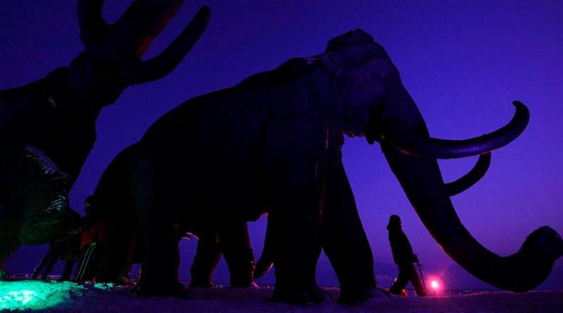Una empresa va por la des-extinción: quiere de vuelta a los mamuts lanudos
