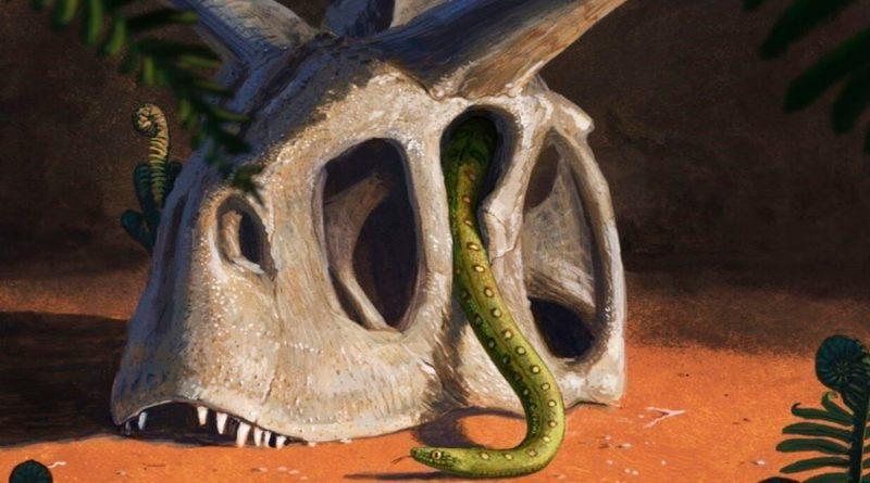 Todas las especies de serpientes vivas se originaron gracias al impacto de un asteroide en la Tierra: científicos