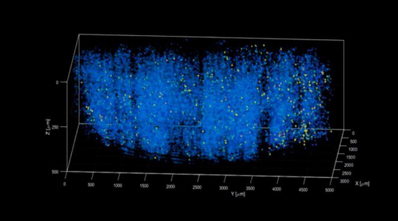 Un microscopio de perlas de luz descubrirá el cerebro profundo