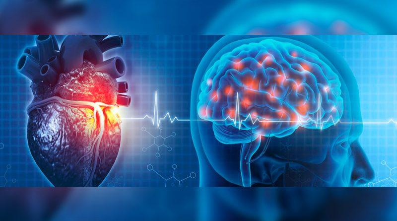 El estado de excitación altera los circuitos neuronales responsables de la toma de decisiones