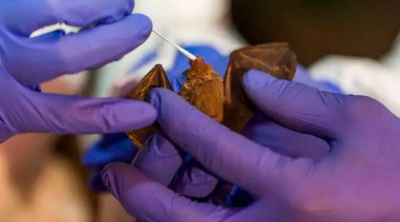 Científicos de Wuhan planearon infectar a murciélagos con coronavirus mejorados año y medio antes del inicio de la pandemia