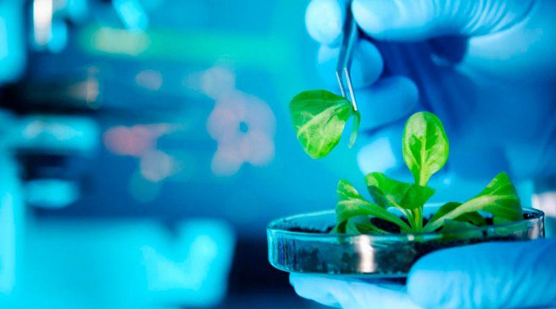 Investigadores patentan terapia basada en planta para anomalía ocular