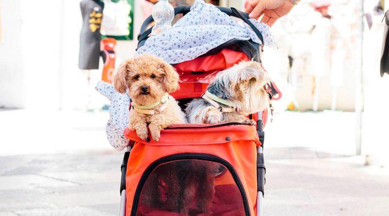 ¿Es malo humanizar a las mascotas?, esto dice la UNAM