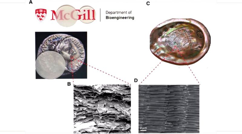 Crean un vidrio irrompible inspirado en los caparazones de los moluscos