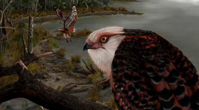 Hallan fósil de la que sería una de las especies de aves rapaces más antiguas