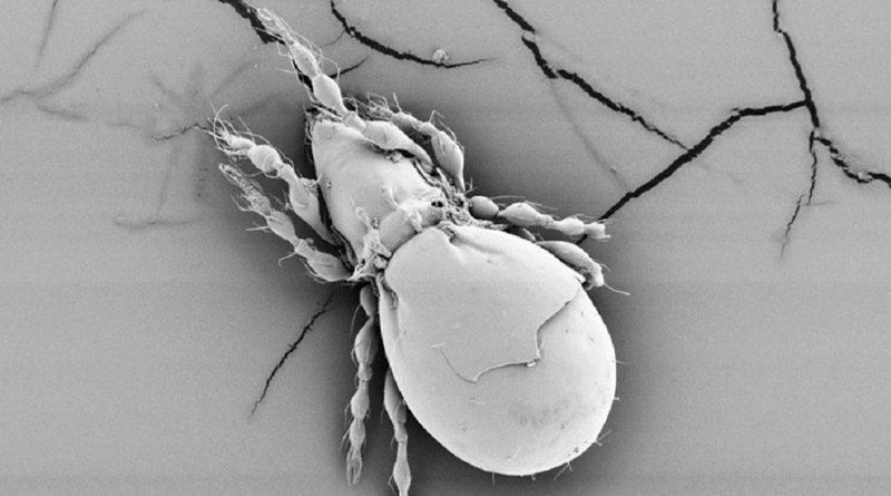 Descubren la posibilidad de supervivencia de una especie sin reproducción sexual