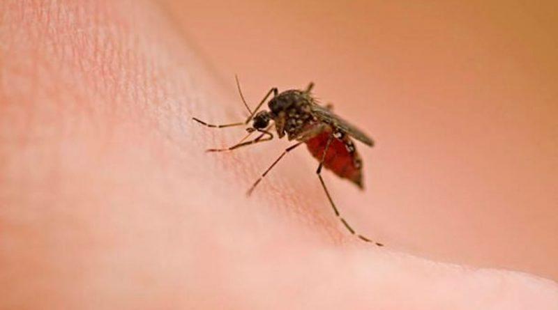 """La ciencia explica cómo volverse """"invisible"""" para los mosquitos"""