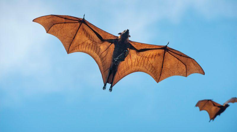 Se descubrió el primer virus relacionado con el SARS-CoV-2, encontrado en murciélagos