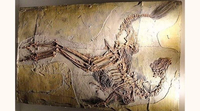 El noreste de China fue un oasis fresco para los dinosaurios con plumas