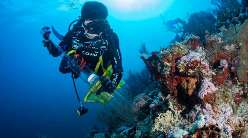 Científicos hallan corales enfermos y especies invasoras en el arrecife Bajos del Norte