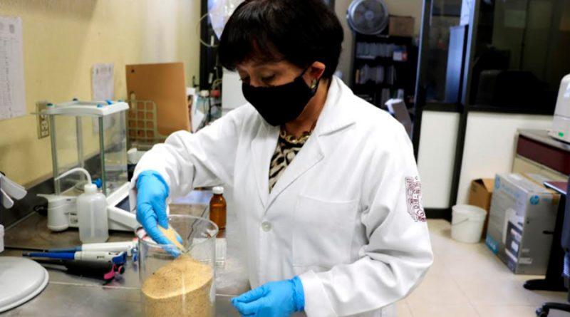 Estudio del IPN confirma que consumo de semilla germinada de amaranto reduce niveles de colesterol