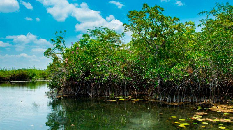 Científicos descubren antiguos manglares en la Península de Yucatán