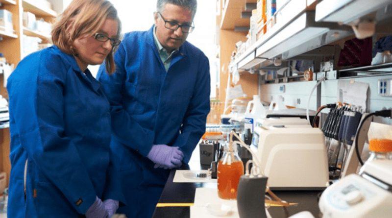 Prueban con éxito riñón bioartificial que evitará futuras diálisis