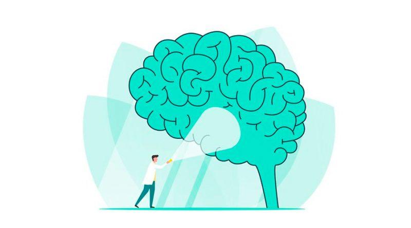 Científicos lograron mapas más detallados del cerebro que ayudarán a tratar la enfermedad de Alzheimer y el Parkinson
