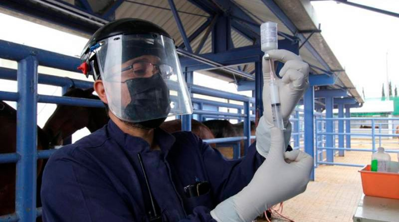México inicia producción de suero equino para tratar COVID-19