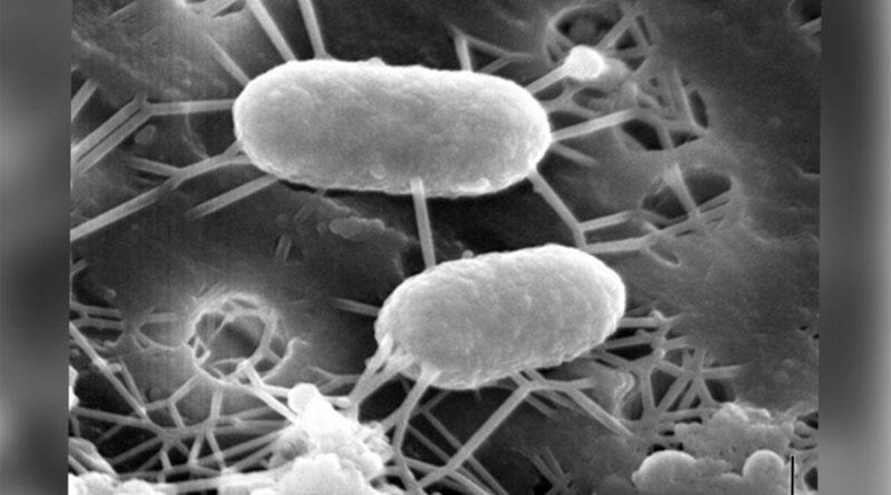 'Bacterias come-metales', la nueva arma de científicos chilenos contra los desechos mineros
