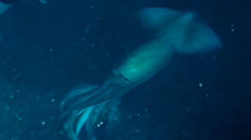 """Un equipo de científicos encontró un calamar """"mas grande que un humano"""" [VIDEO]"""