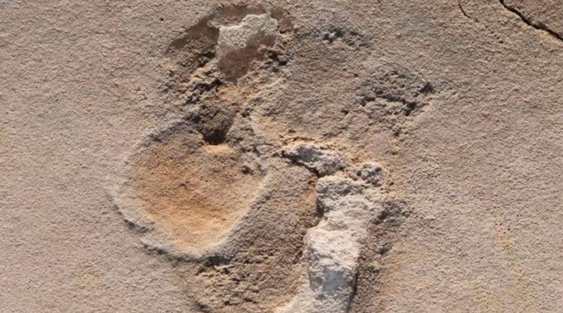 Huellas prehumanas de seis millones de años descubiertas en Creta