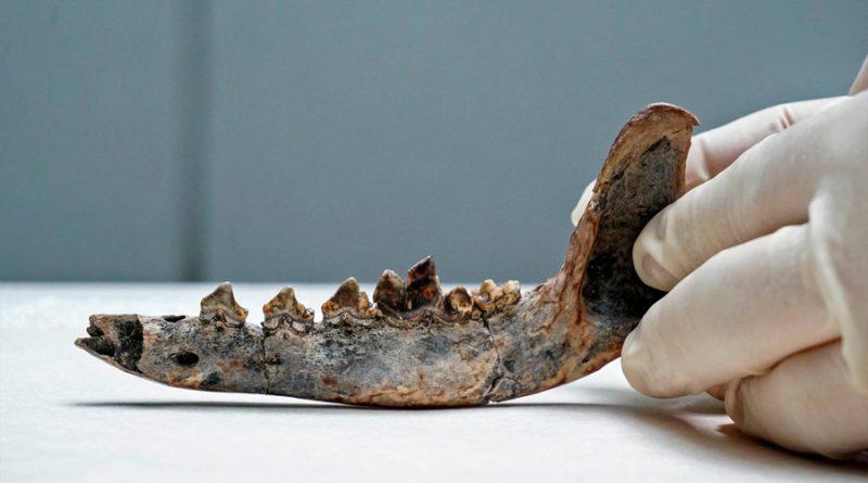 Los perros podrían haber habitado Centroamérica desde hace 12 mil años