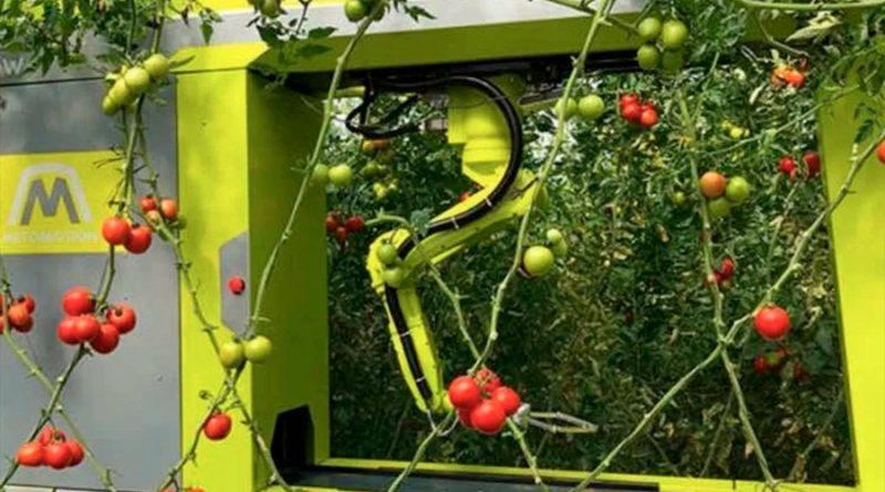 GRoW, un robot capaz de cultivar tomates de forma autónoma en un huerto