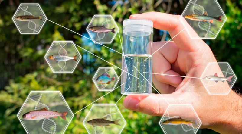 La Unesco lanza proyecto para recopilar ADN de especies marinas en riesgo