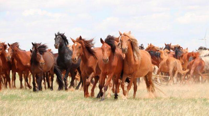 Descubren el origen de todos los caballos domésticos modernos