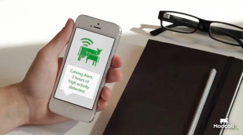 Así es el sensor que predice el parto de las vacas y lo notifica a los ganaderos por el móvil