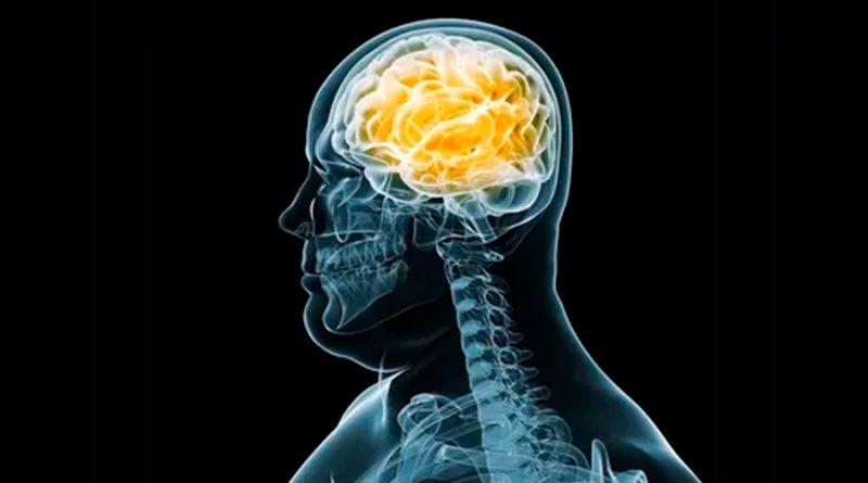 Relacionan pérdida de una proteína en el cerebro con la obesidad