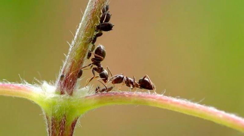 ¿Por qué disminuyó el tamaño del cerebro humano? Ciencia halla respuesta en las hormigas