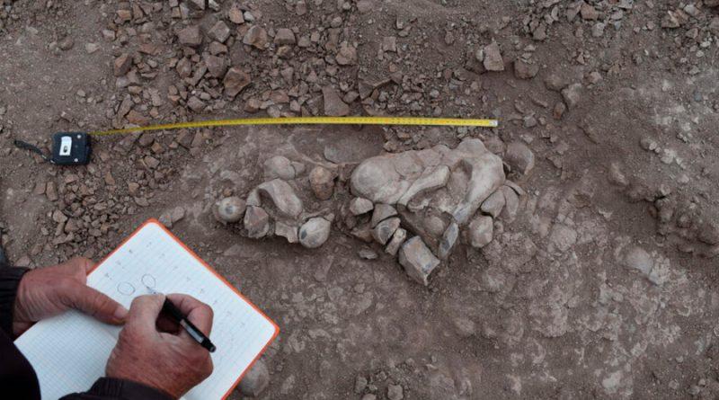 Descubren en Argentina más de cien huevos y 80 esqueletos de dinosaurios