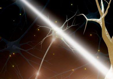 Las enfermedades neurodegenerativas impiden generar nuevas neuronas