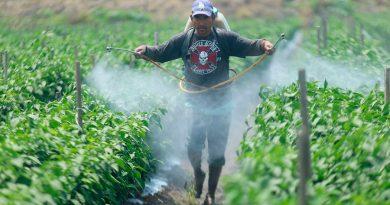 El óxido de etileno, el compuesto cancerígeno desapercibido en México