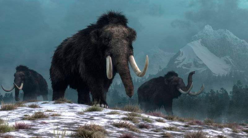 Los humanos no causaron la extinción del mamut lanudo, asegura una nueva investigación