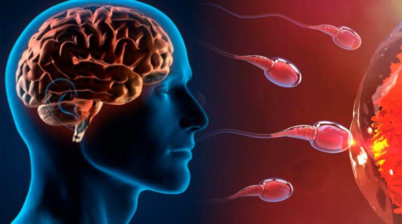 La contaminación está inflamando el cerebro y reduciendo los espermatozoides